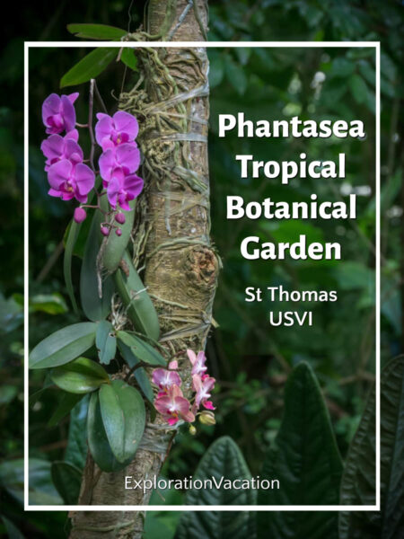 "orchids with text ""Phantasea Tropical Botanical Garden St Thomas"""