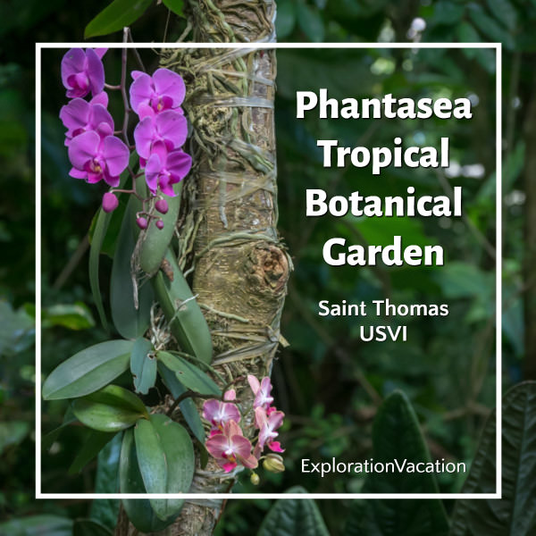 Permalink to: The tropical beauty of Phantasea garden on Saint Thomas