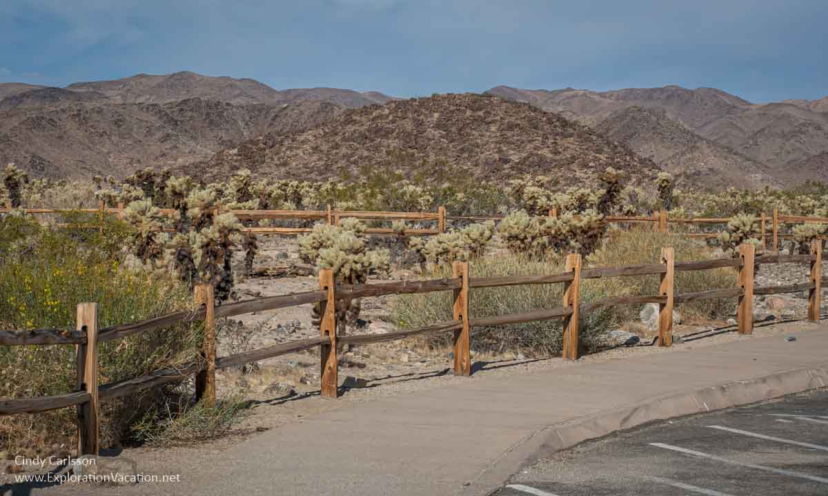 photo of a fence with cholla cacti and mountains