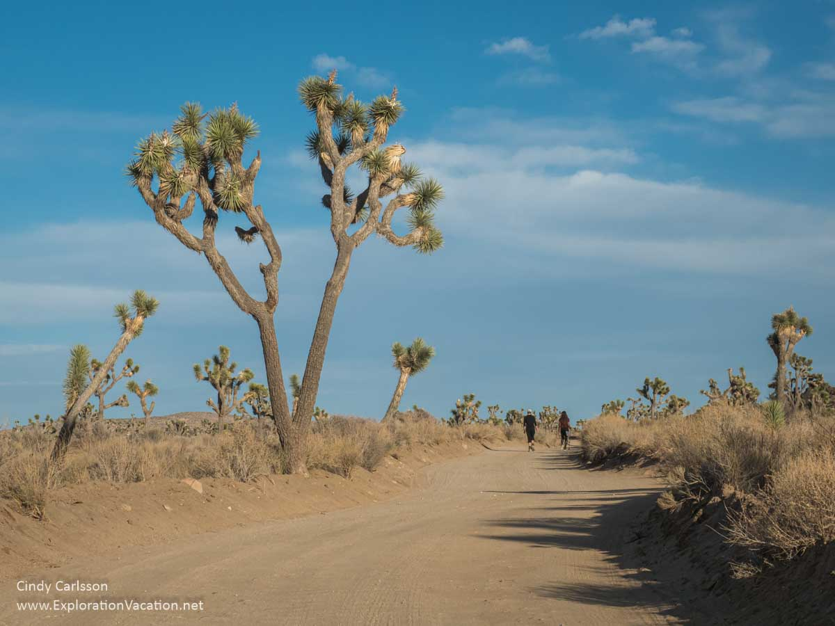 photo of hikers on a dirt road with Joshua trees