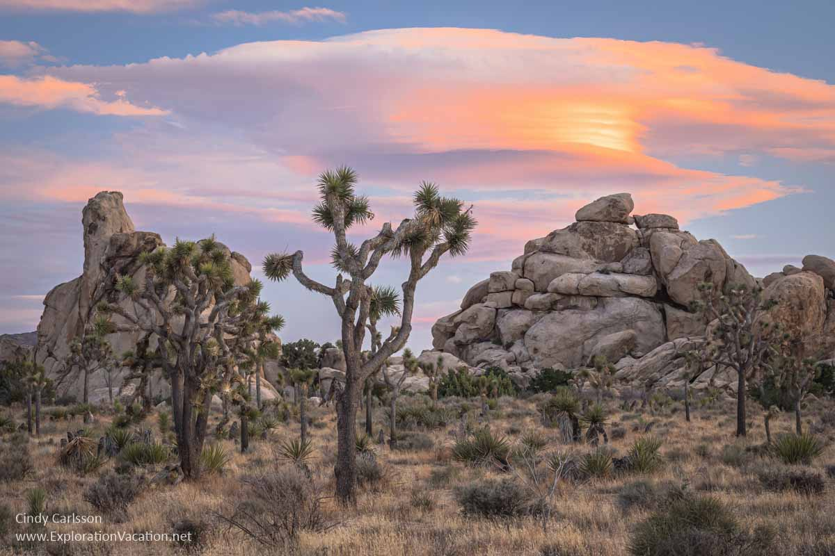 photo of sunset with Joshua tree and scenery