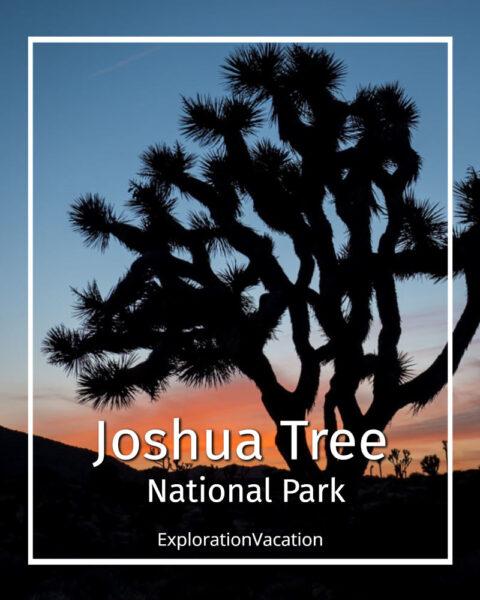 "photo of a Joshua tree at sunset with text ""Joshua Tree National Park California"""