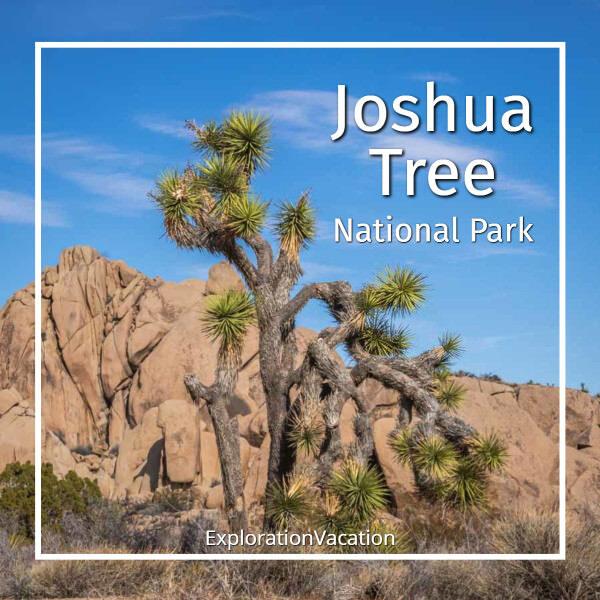 """photo of a Joshua tree with text """"Joshua Tree National Park"""""""