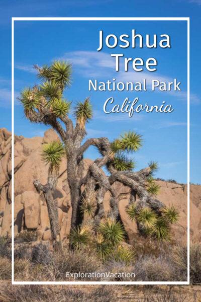 "photo of a Joshua tree and boulders with text ""Joshua Tree National Park California"""