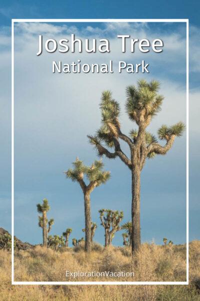 """photo of a Joshua tree with text """"Joshua Tree National Park California"""""""
