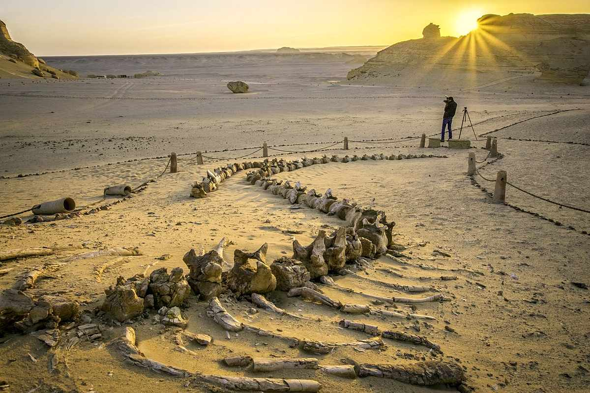 photo of a large whale fossil in a desert at sunrise
