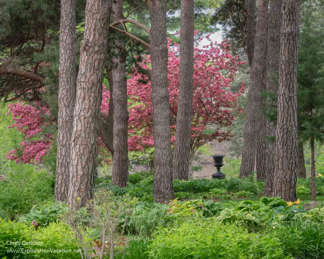 woodland garden with blooming fruit trees