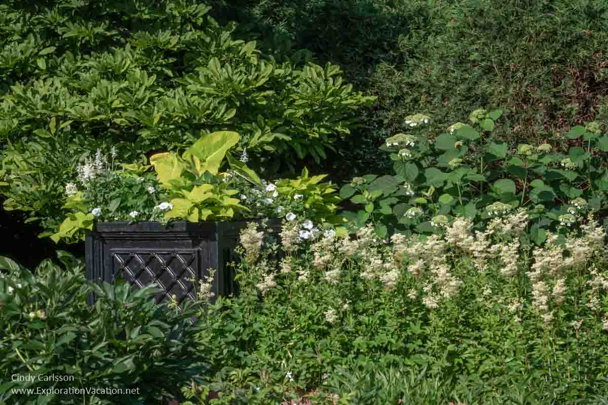 Formal flower beds with white flowers
