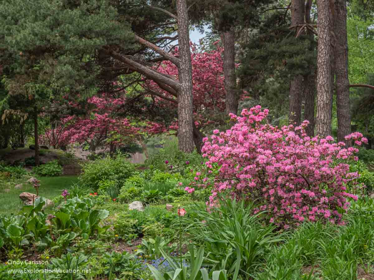 pine trees with flowering trees and shrubs