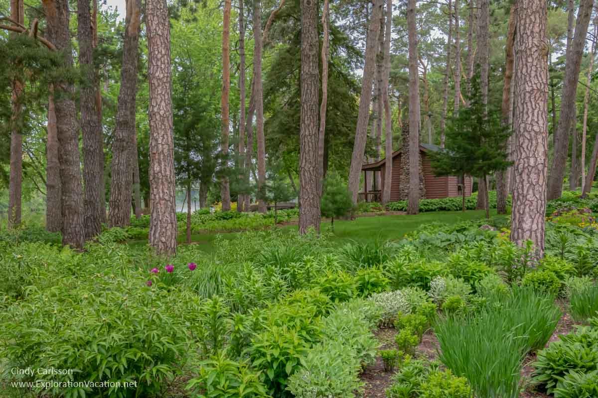 shade gardens below pine trees