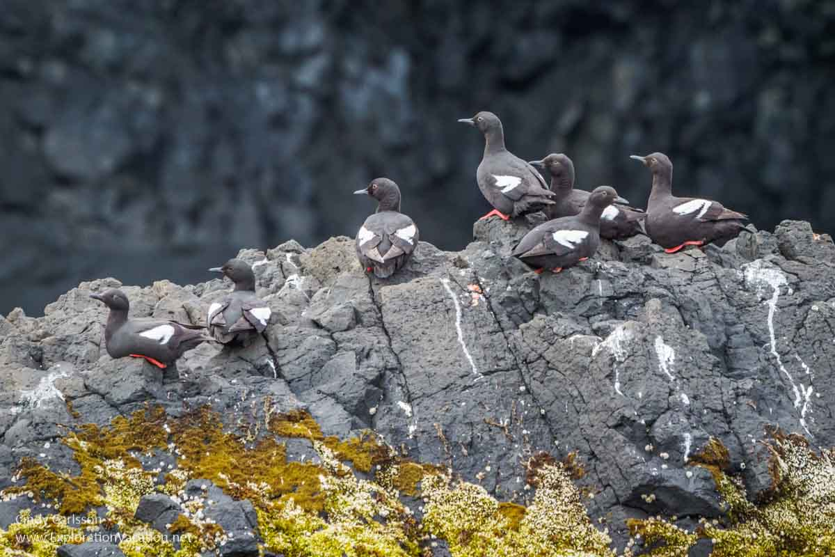 black and white sea birds perched on rocks