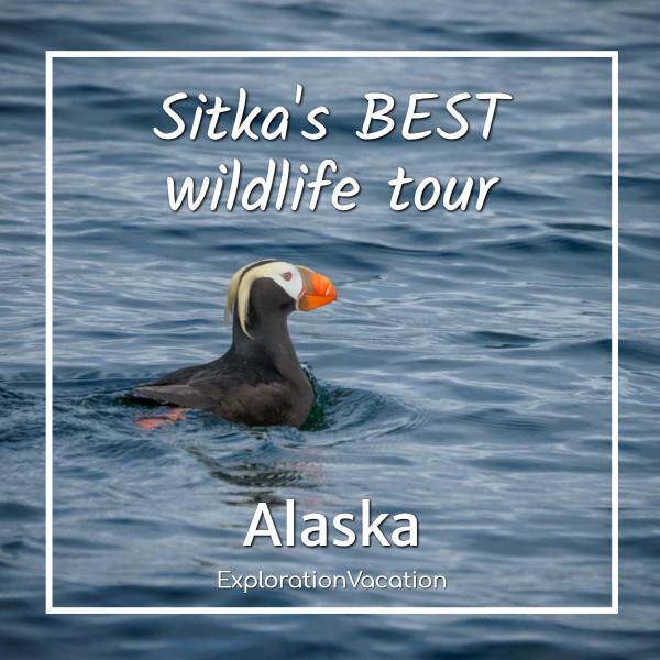 "Puffin in Alaska's Sitka Sound with text ""Sitka's best wildlife tour"""
