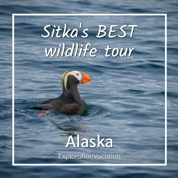 Permalink to: A Whale's Song: The best wildlife cruise in Sitka, Alaska