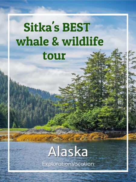 """forested islands with text """" with text """"the best wildlife tour in Sitka Alaska"""""""