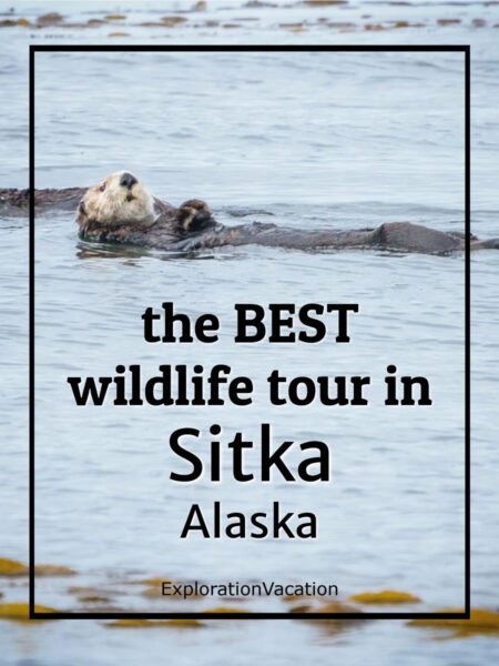 """Sea otter with text """"the BEST wildlife tour in Sitka Alaska"""""""
