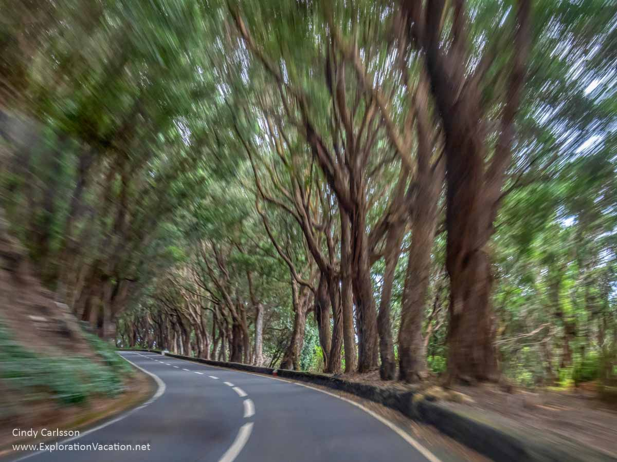 narrow curving road through a forest